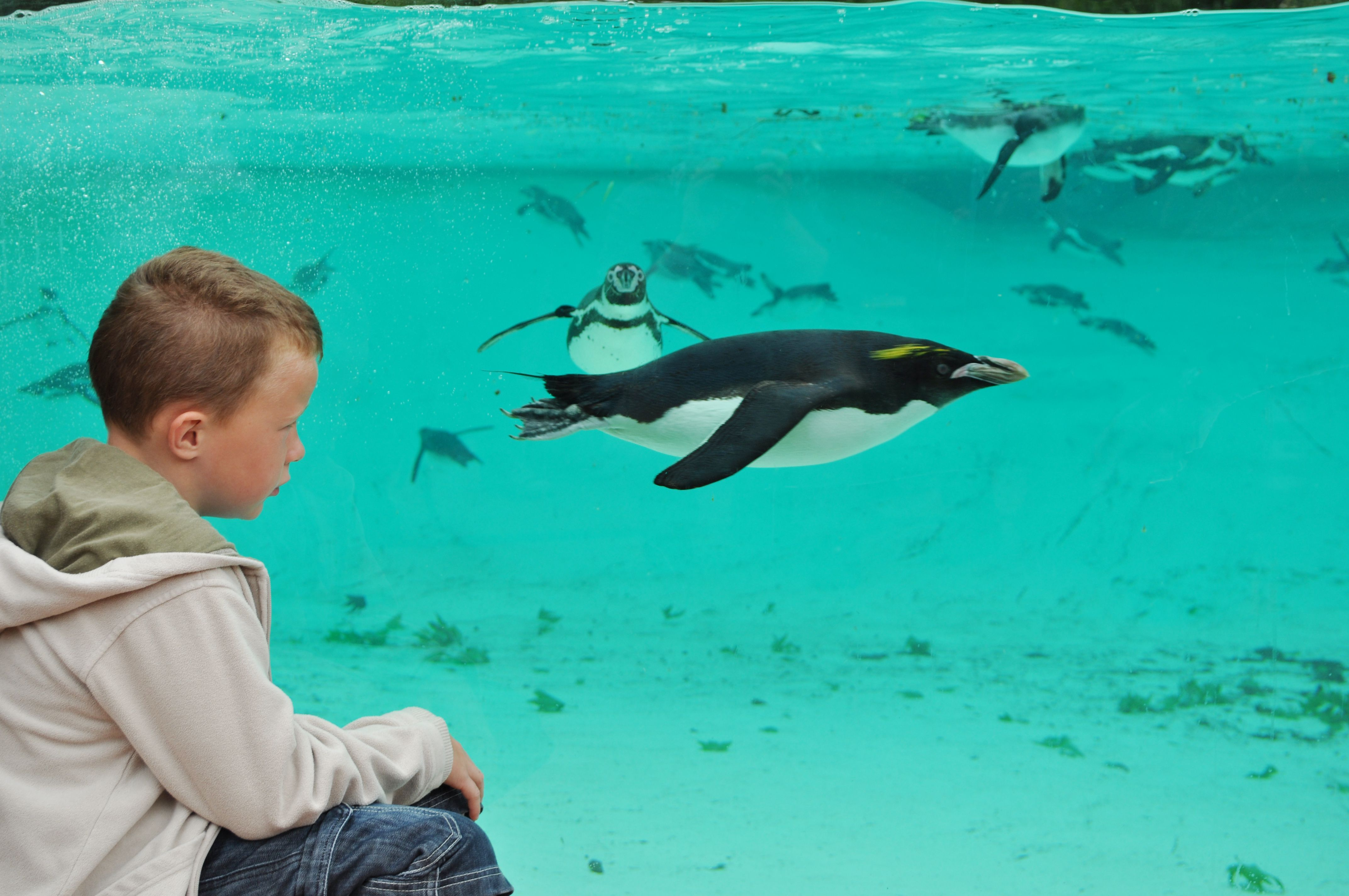 Find Out More About ZSL London Zoo