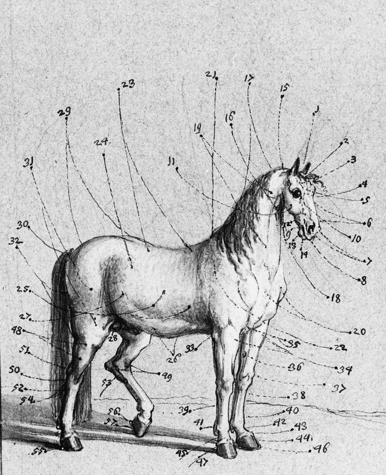 Description of the outer parts of the horse