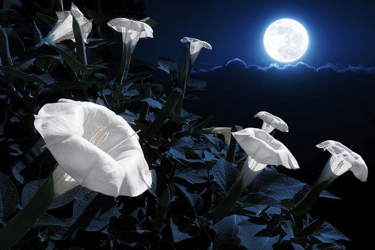Plant a magical moon garden for Under the garden moon