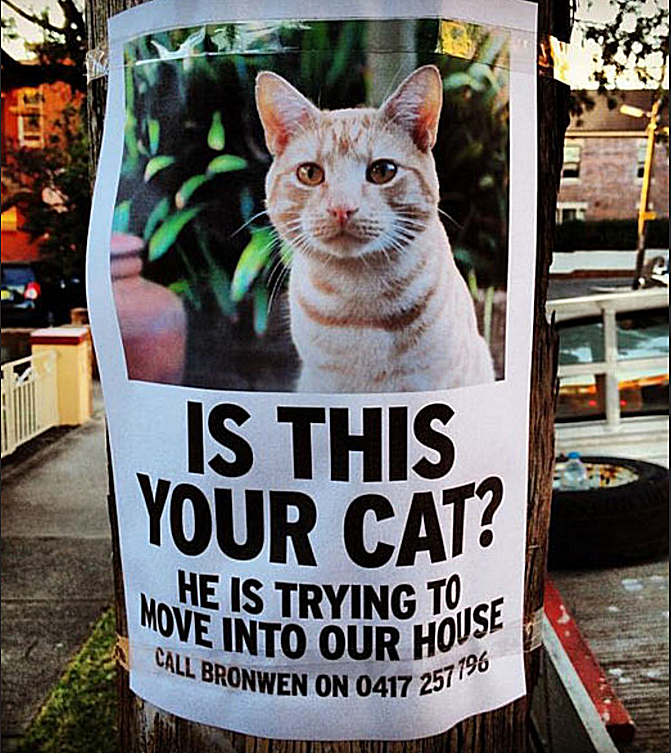 [Image: missing-cat2-58b8c97e3df78c353c20cf55.png]