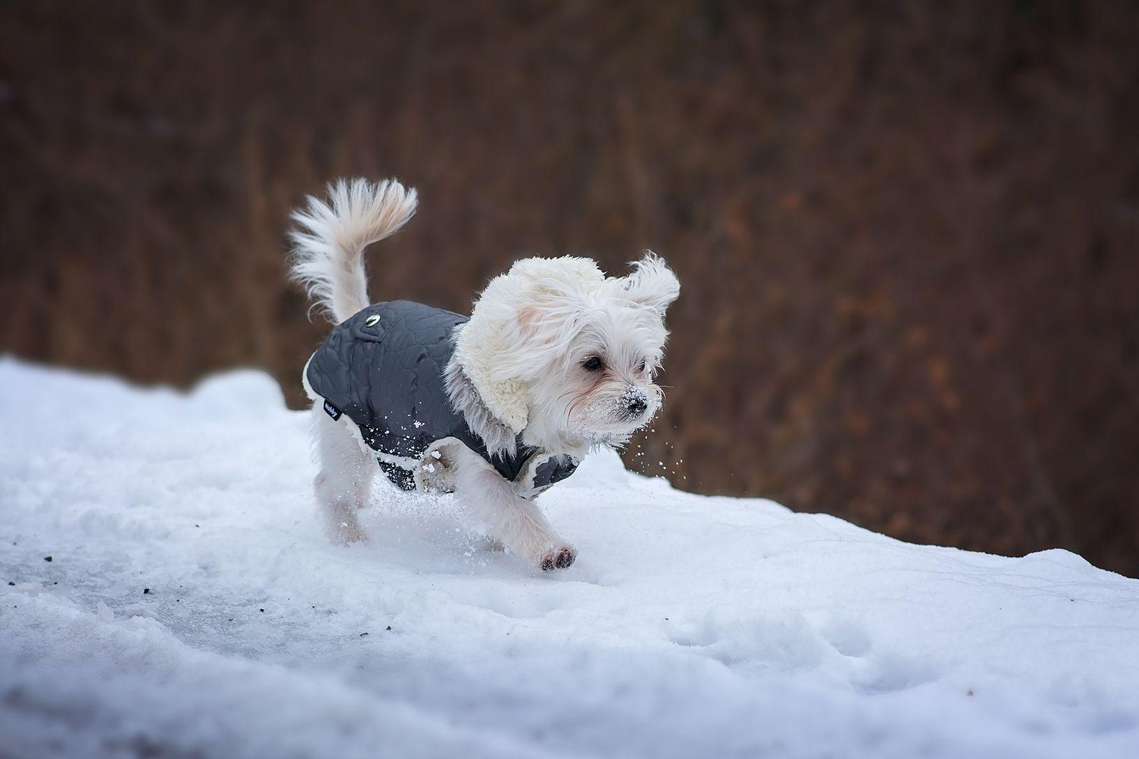 Free sewing pattern for a warm weatherproof dog coat jeuxipadfo Images
