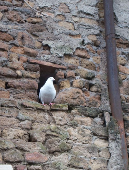 A dove perched in a hole in the wall outside the Basilica di Sant'Agnese Fuori le Mura (Basilica of St. Agnes Outside the Walls), Rome, Italy. The dove is the traditional Christian symbol for the Holy Spirit. (Photo © Scott P. Richert)