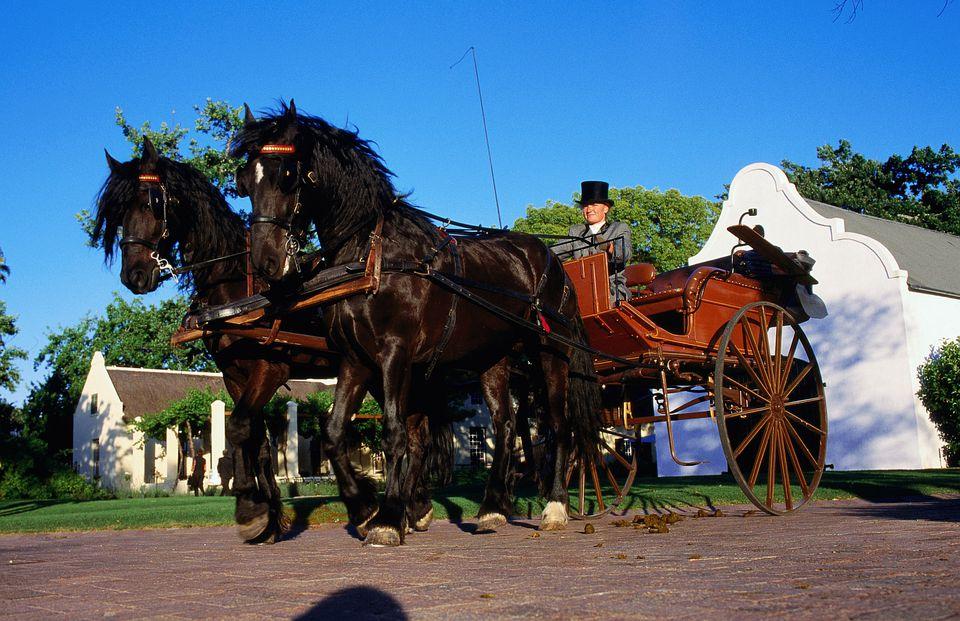 Friesian horse team and cart.