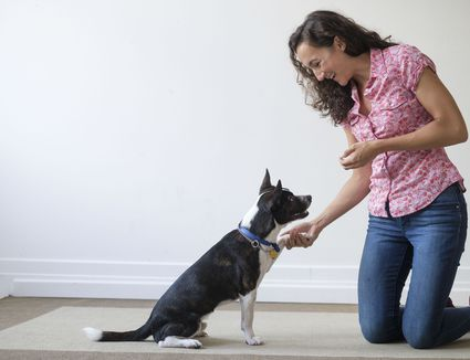 Dog training 101 how to completely train your dog do it yourself dog training program solutioingenieria Gallery