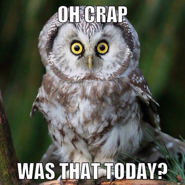 owl-today-594e94e75f9b58f0fce867b3.jpg