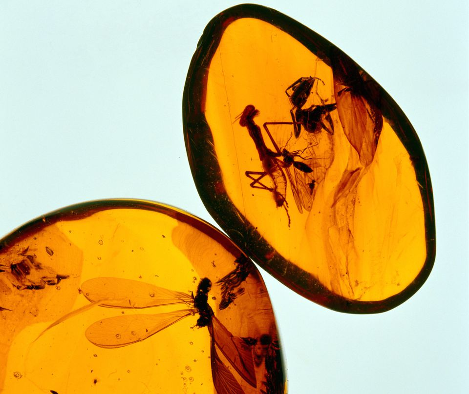 Close-up of an amber with a mosquito in it