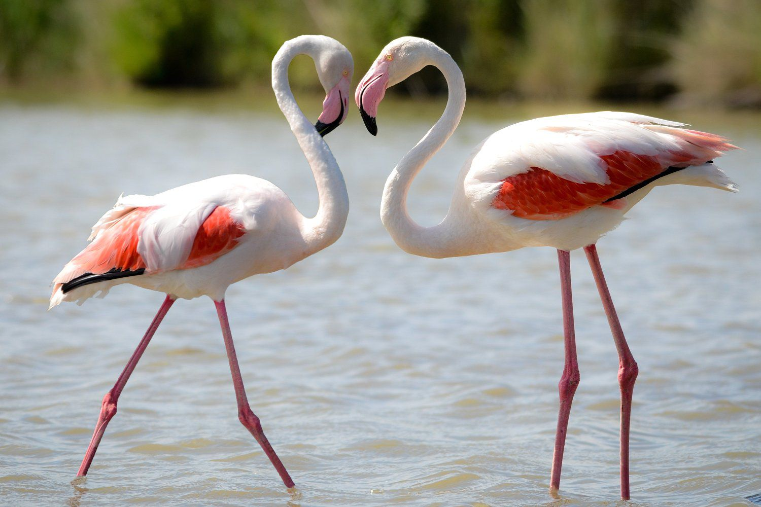 Fun Facts About Flamingos