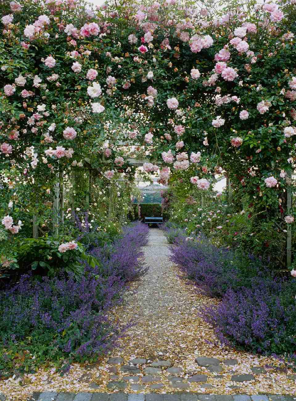 Summer flower garden border ideas climbing rose pergola workwithnaturefo