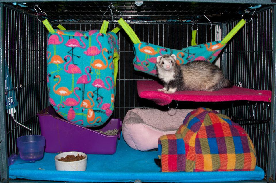 My Ferret Cage