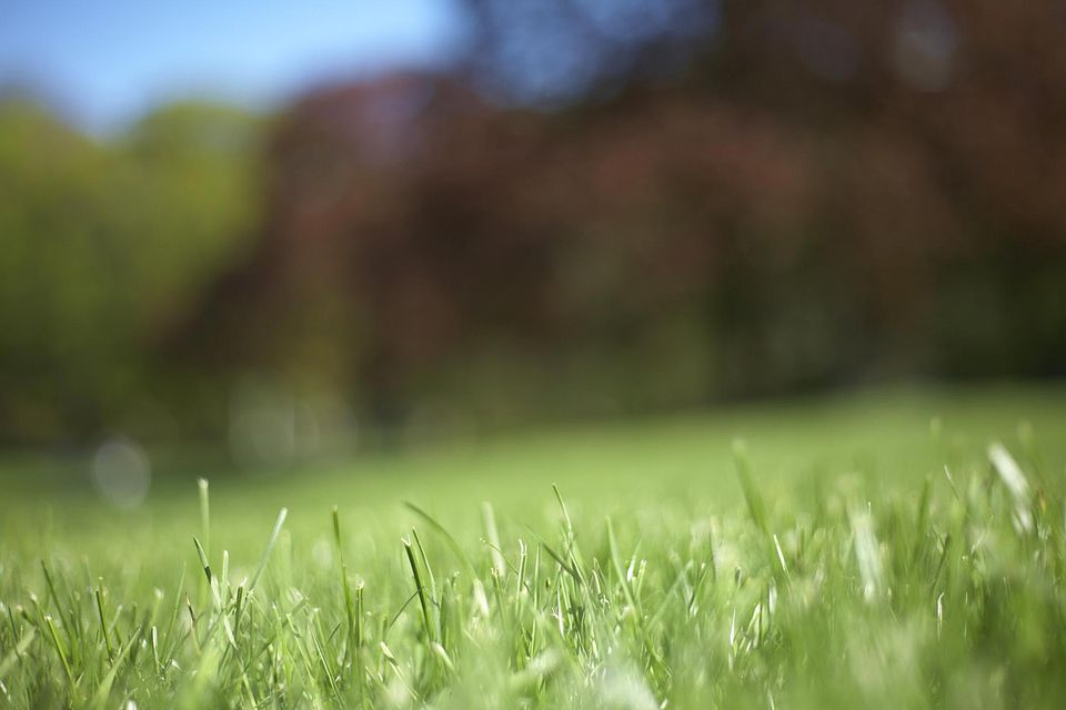 Grass and trees, ground perspective