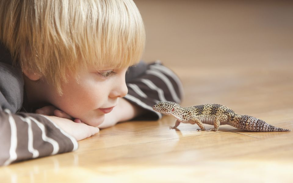 Child with Leopard Gecko