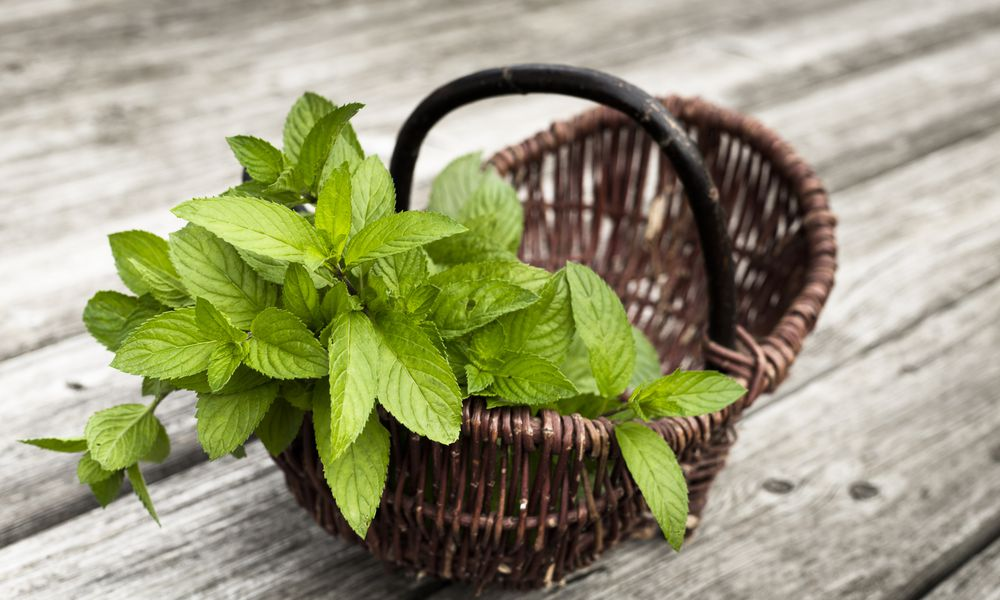 Basket with fresh mint
