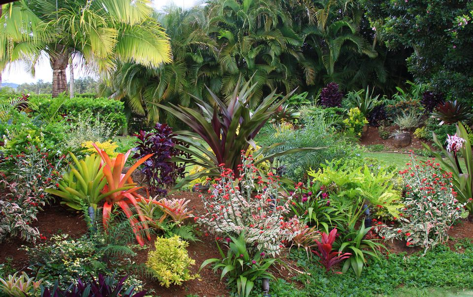 tropical hawaiian flower garden