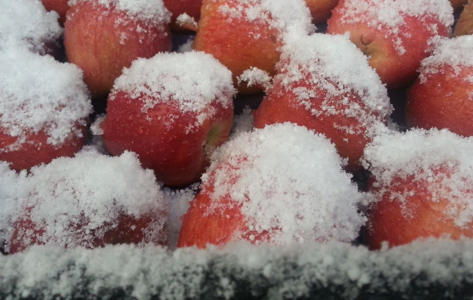 Close-Up Of Frozen Apple