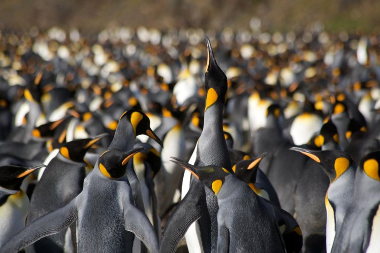 Emperor Penguin Colony Above the rest.