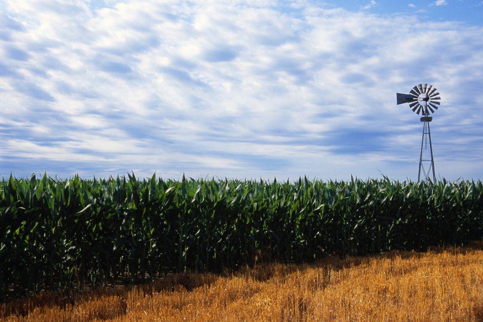 nebraska cornfields