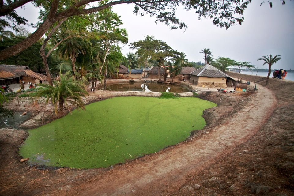 settings Rural View, Village Life,Sundarban