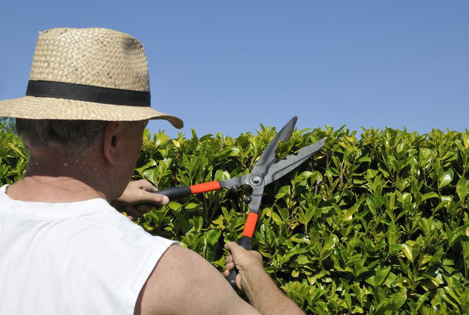 Trimming the hedge