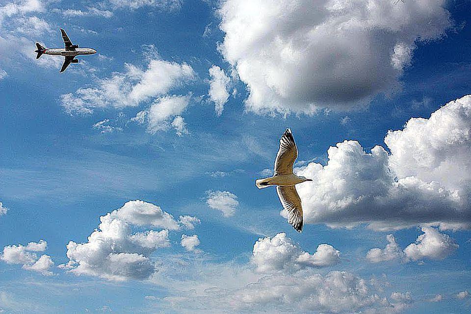 Bird and flight agaisnt sky