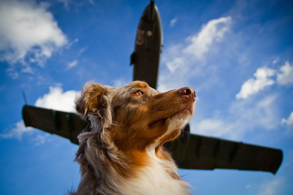 Dog with plane in the background