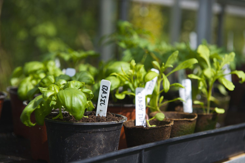 New Grow Vegetables Apartment Balcony