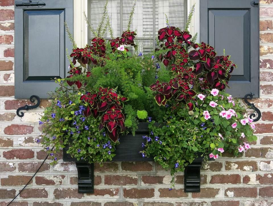 Cascading Window Box Flowers