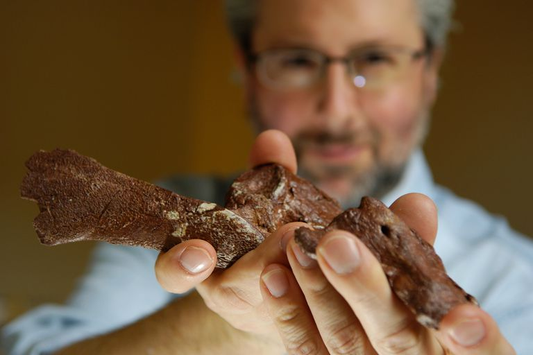 Neil Shubin, Associate Dean and Professor of Organismal Biology and Anatomy at the University of Chicago, holds part of a fossil from Tiktaalik roseae.