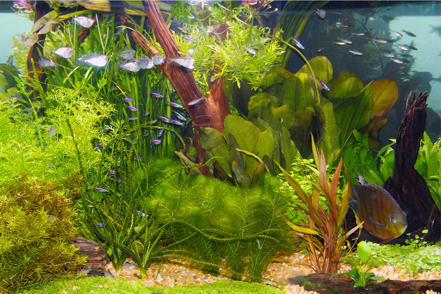 Live plants in community aquariums lighting requirements for Freshwater fish online