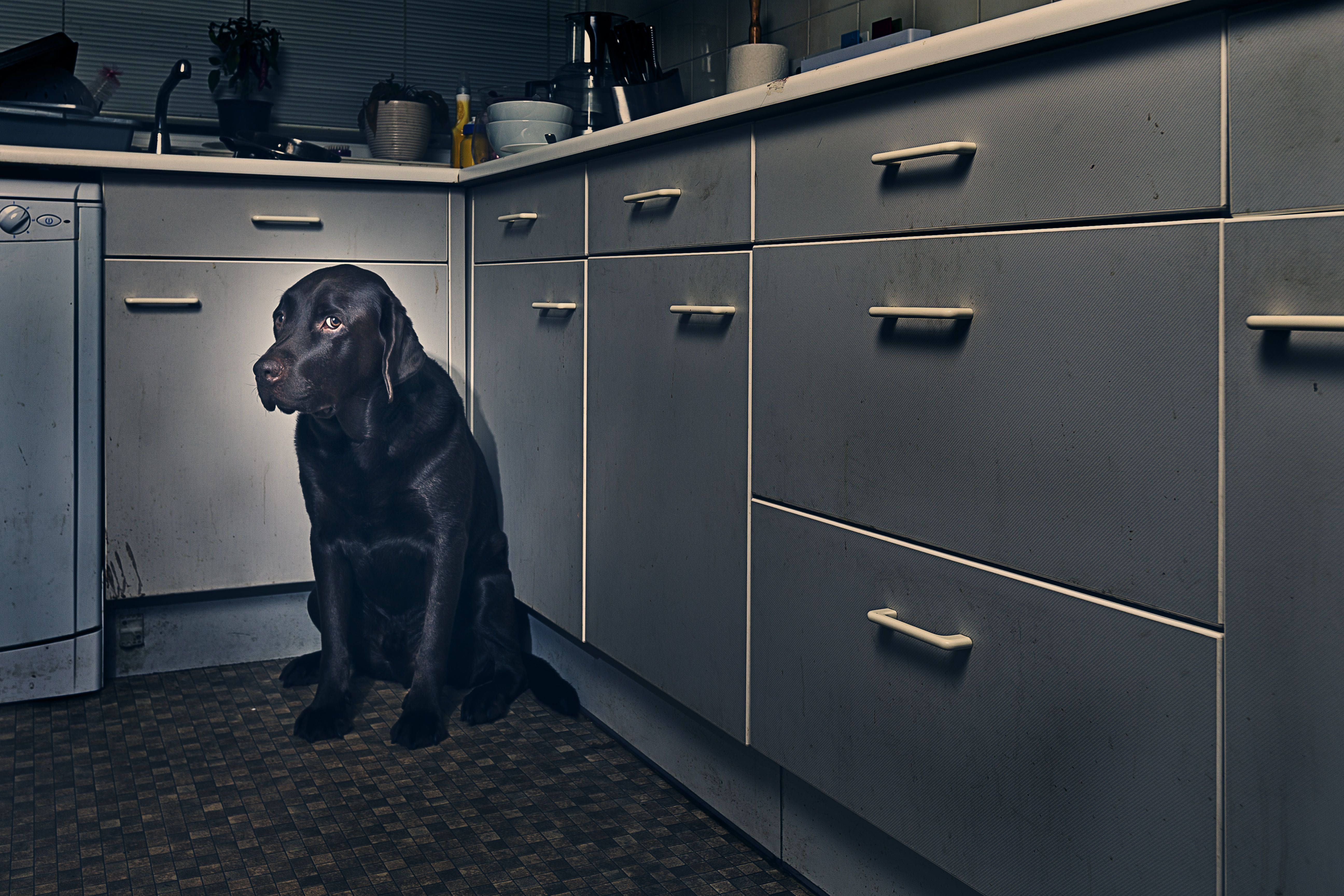 mon Fears and Phobias in Dogs