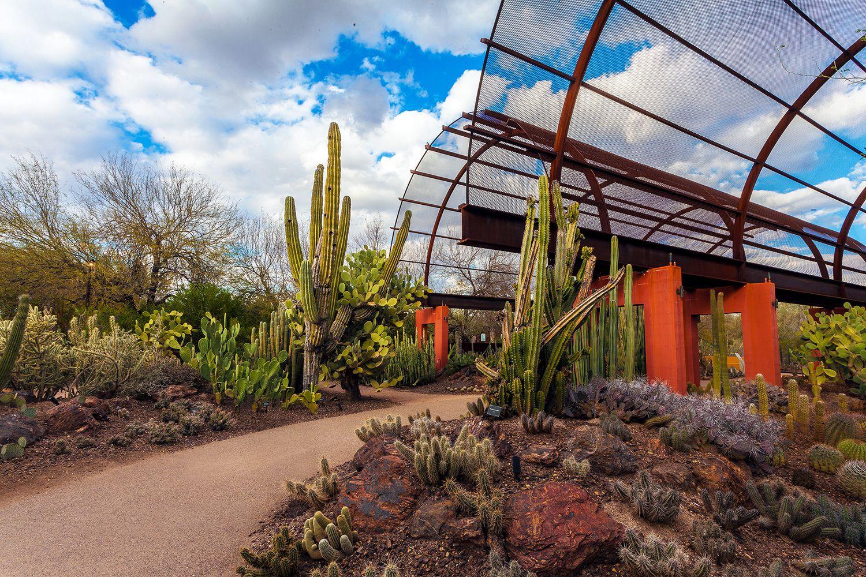 Visiting The Desert Botanical Garden In Phoenix