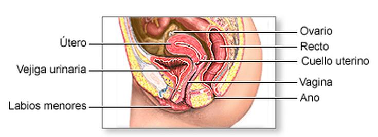 El útero invertido y cómo afecta tu embarazo