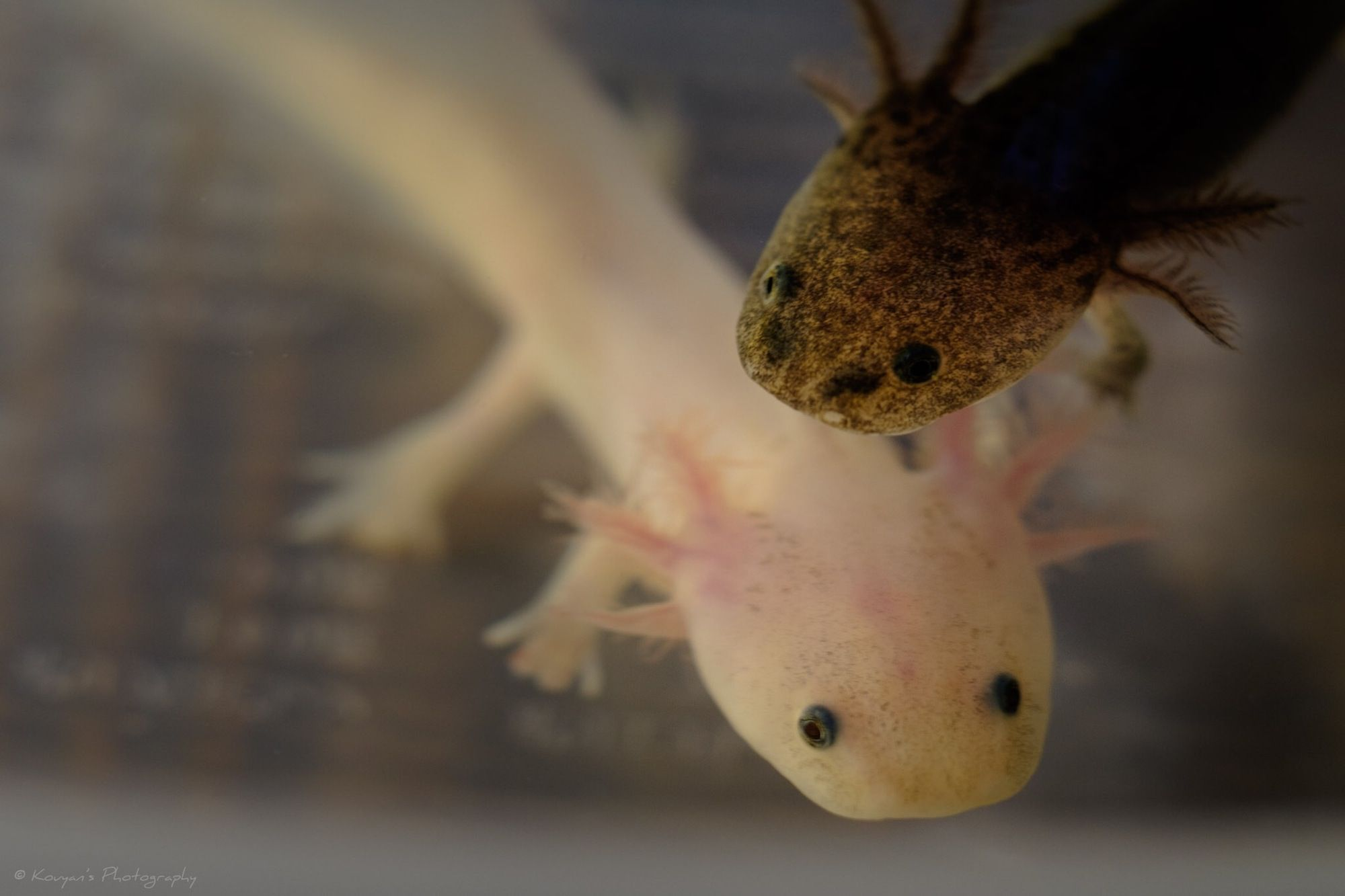 Tanks for pet salamanders and newts for Swimming fish cat toy