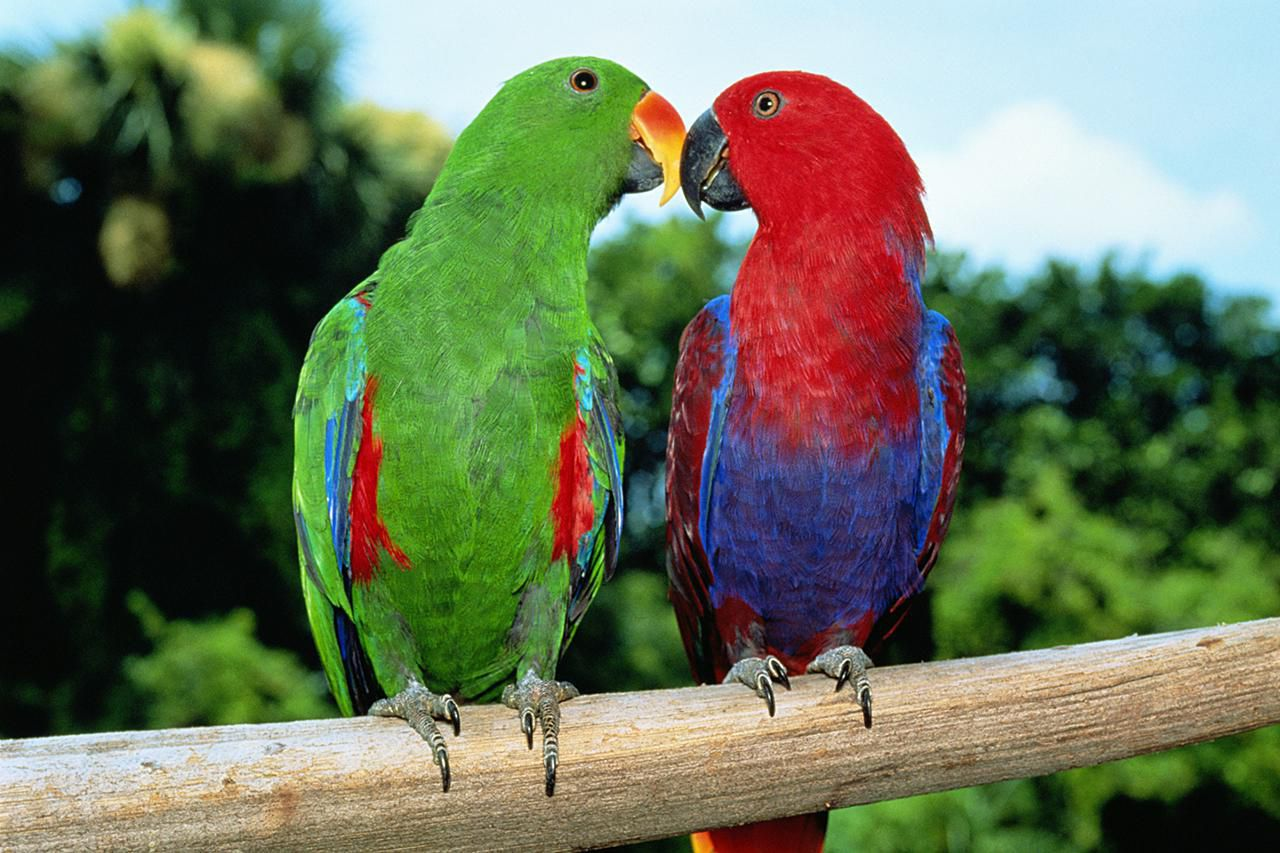 Most Colorful Parrot S...