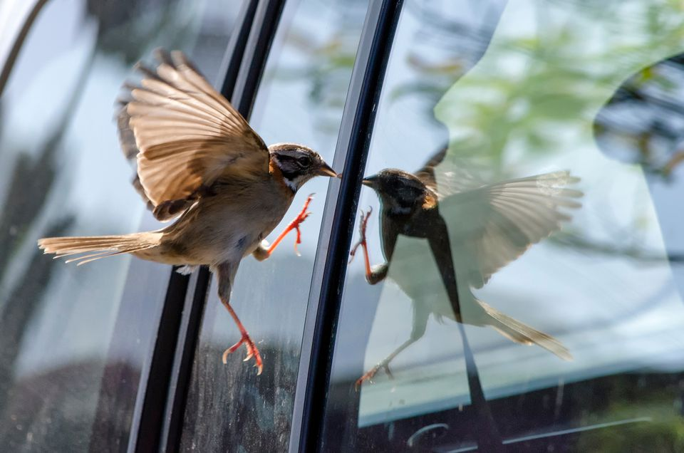 Close-Up Of Bird Flying By Window