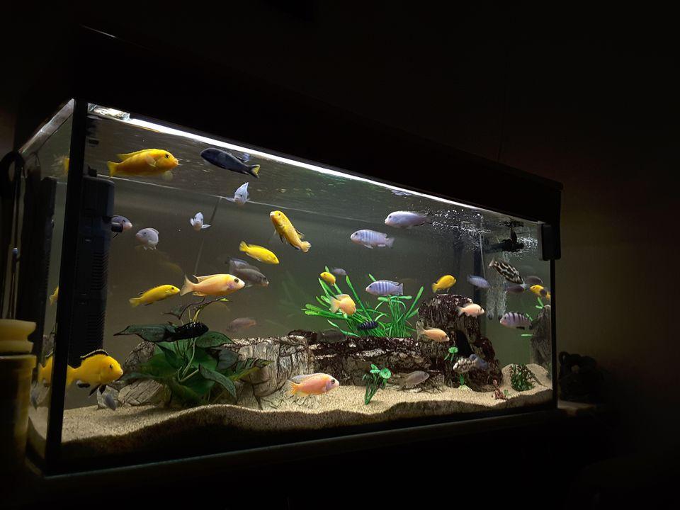 Close-Up Of Fish Swimming In Aquarium At Home