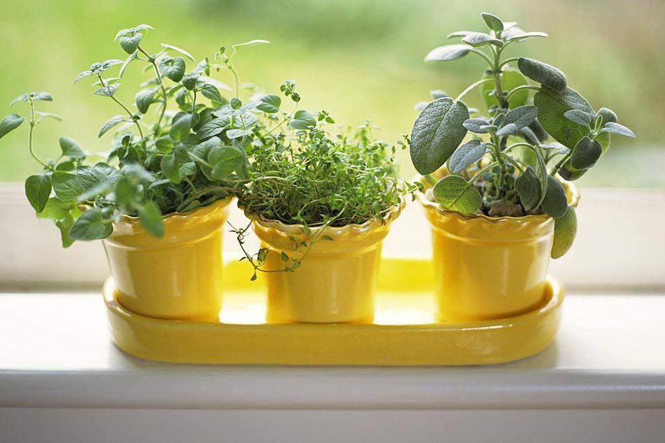 'Pots of sage , thyme and oregano on windowsill'