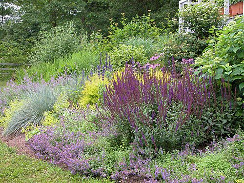 A small garden with diverse plant selection