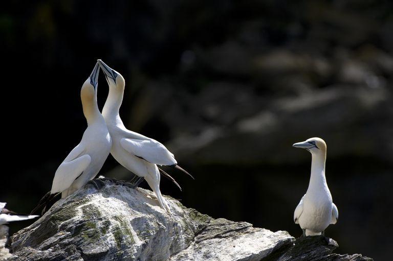 Jealous Bird