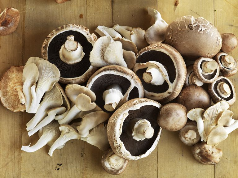 Picture of Mushrooms