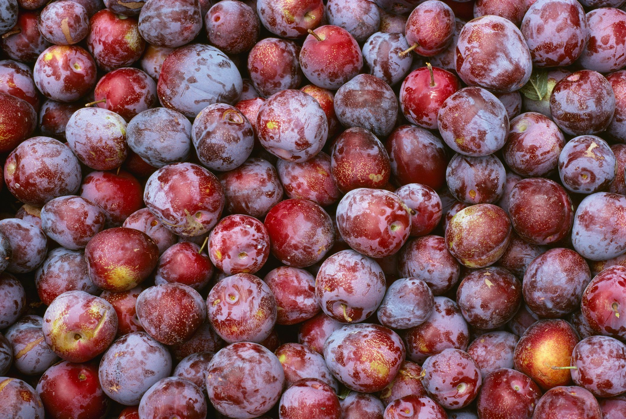 types of plums and pluots plus everything plum