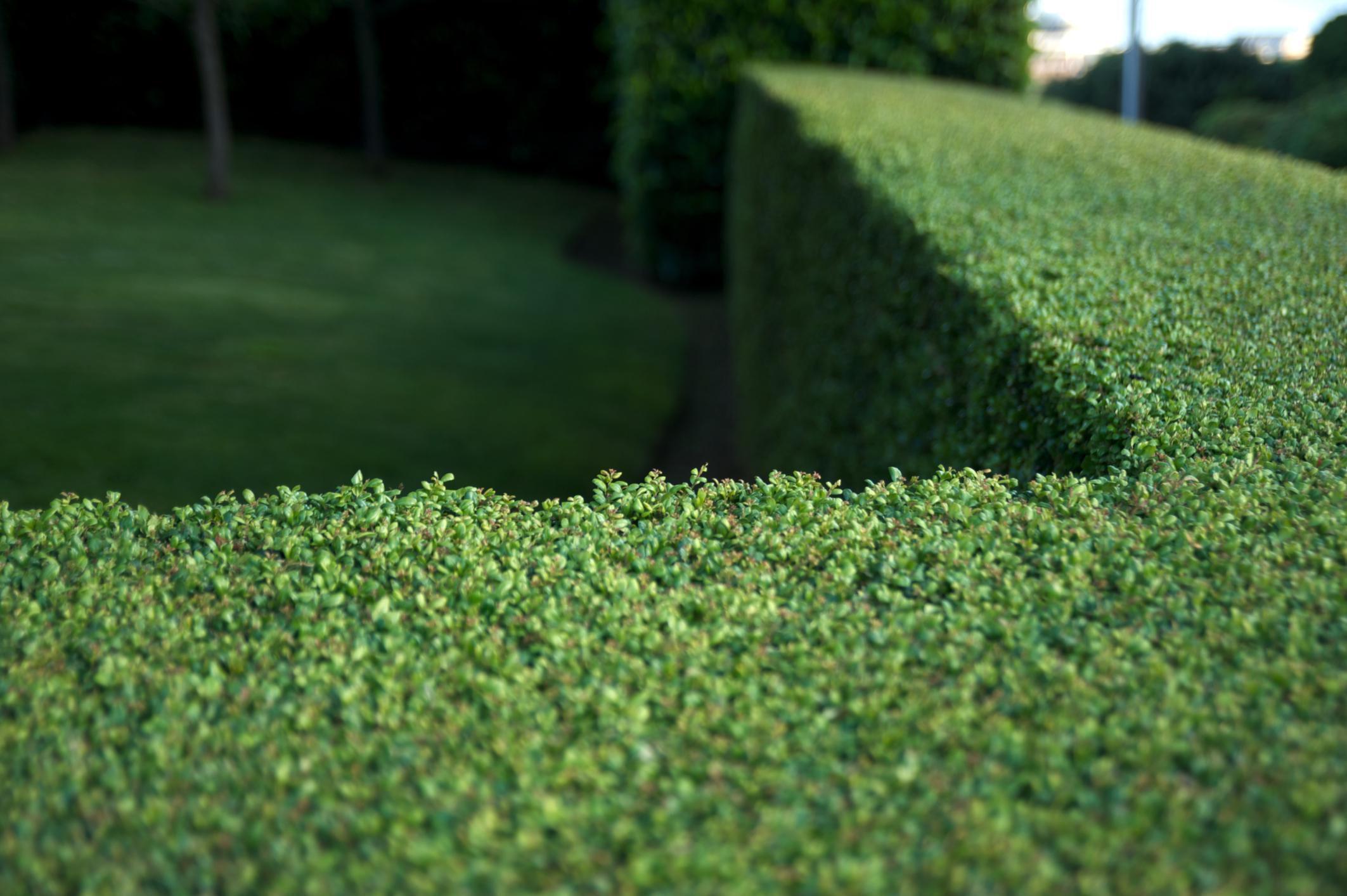 Full Sun Landscaping Ideas