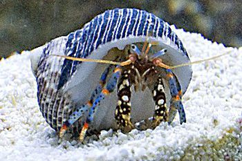 What Fruits Do Hermit Crabs Eat