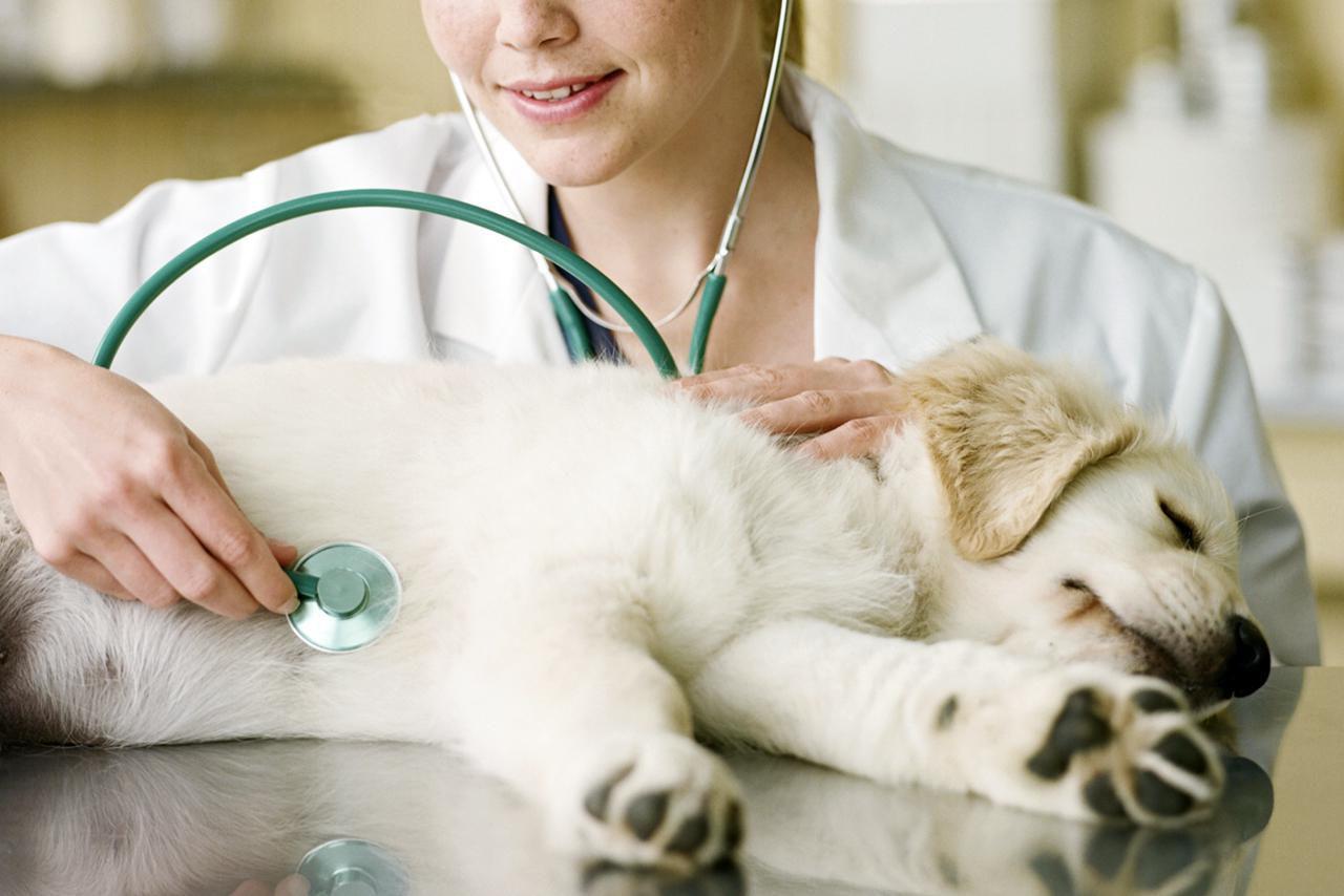 Thyroid Problems In Pets Vet Dr Gary Weitzman