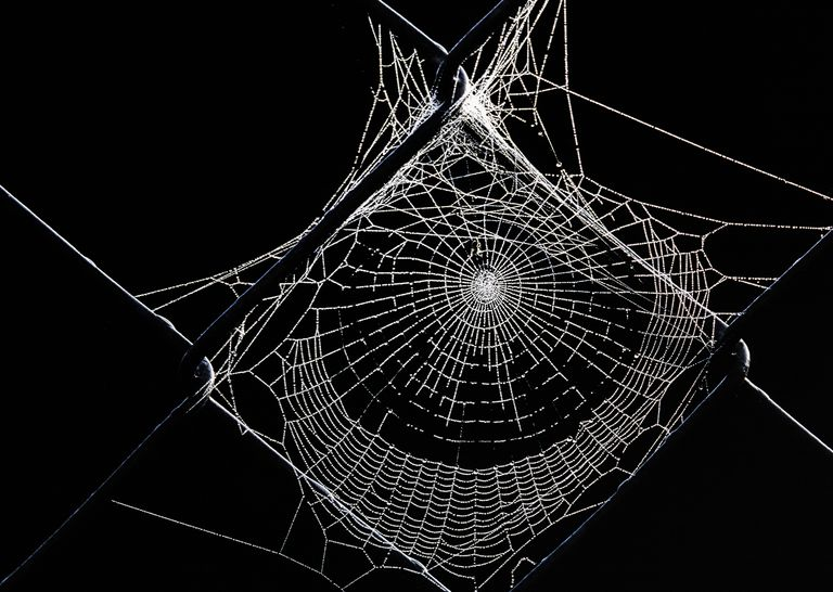 Spider Web with dew droplets