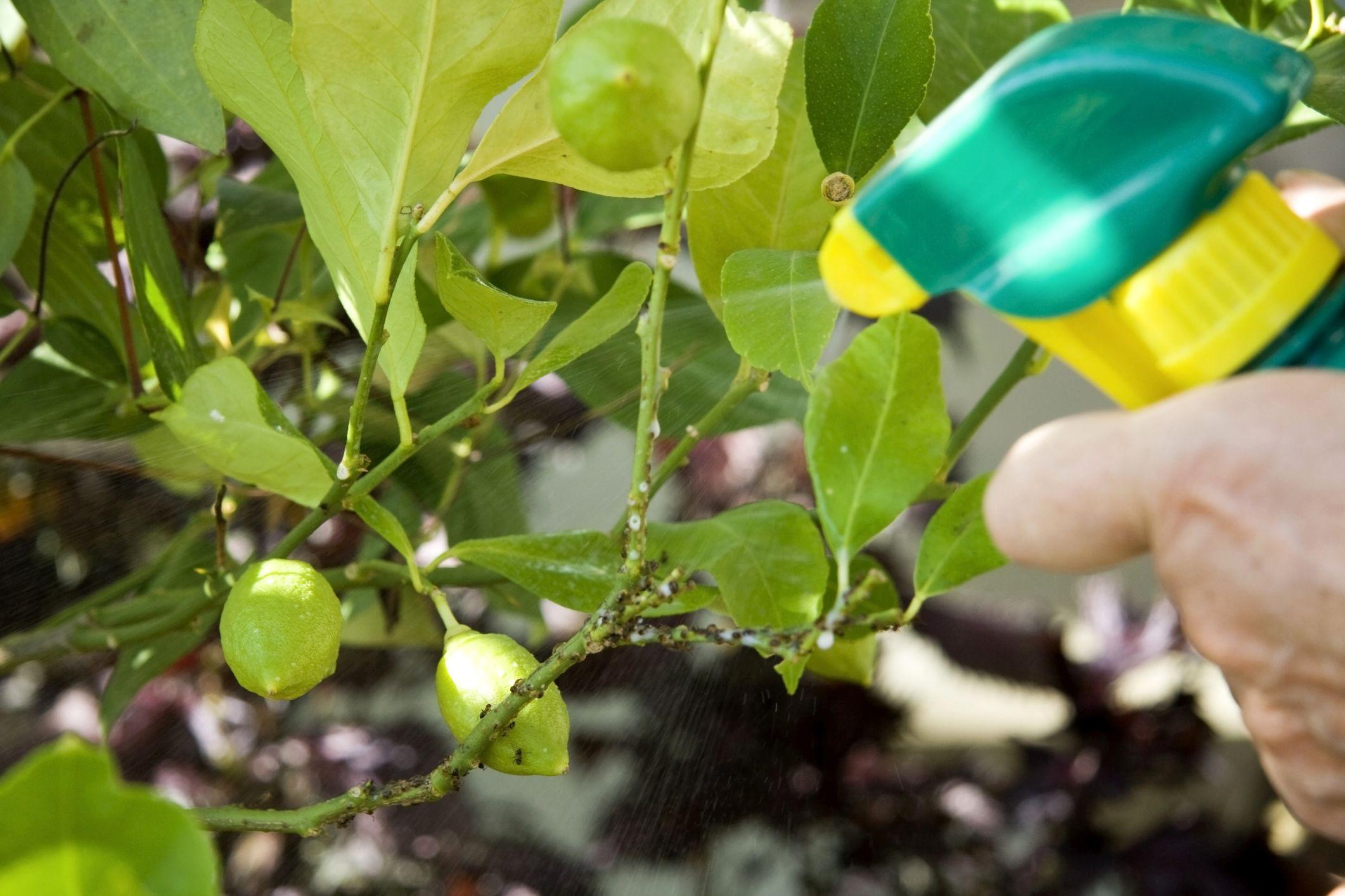 10 remedios contra plagas hongos y plantas desnutridas for Hongos en las plantas de jardin