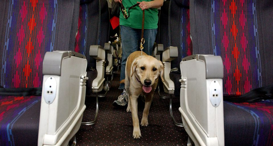 Taking your service dog through airport security is a straightforward process.
