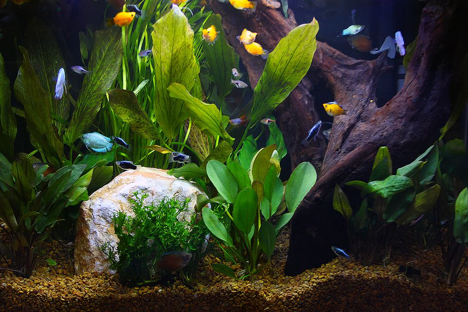 Aquarium Plant Questions and Answers