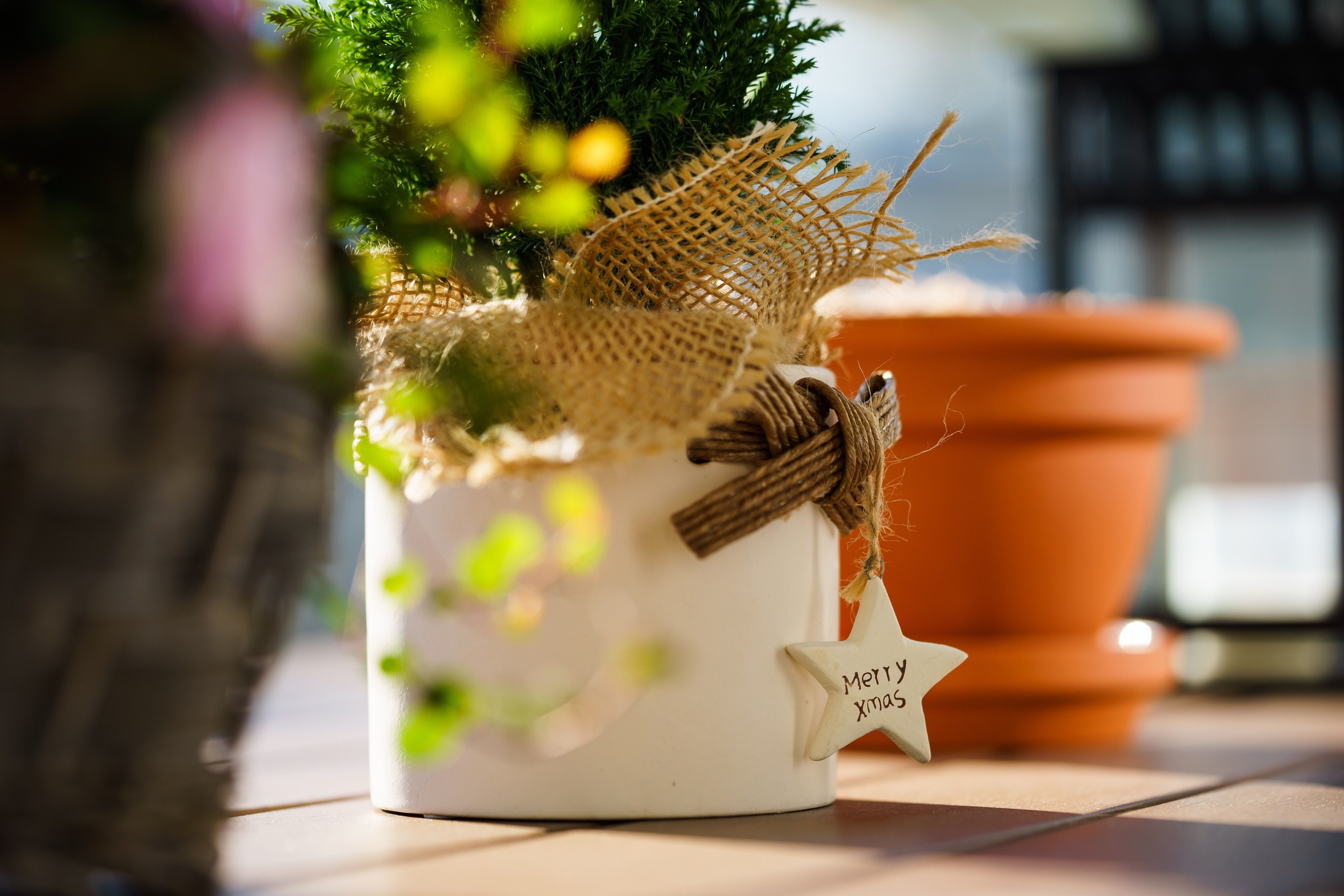 Tips To Keep A Rosemary Christmas Tree Alive