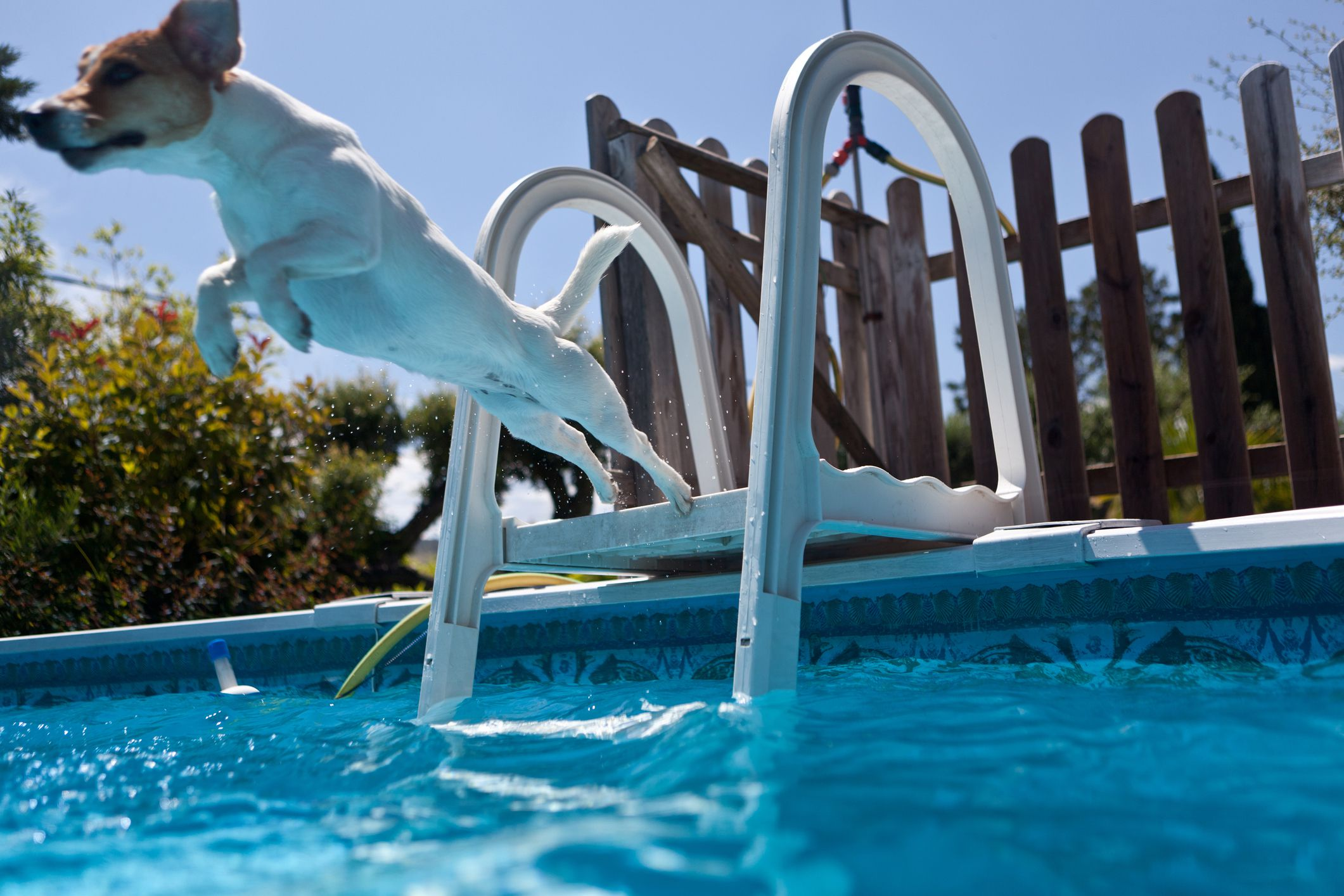15 pool maintenance tips to keep your pool clean dog jumping in pool nvjuhfo Images