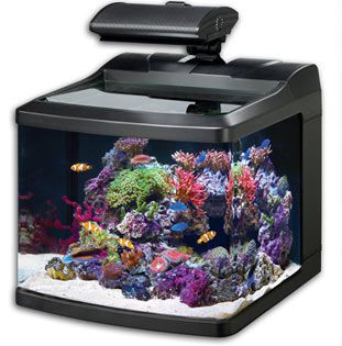 Fish Aquariums - Top List of 1 to 50 Gallon Aquariums